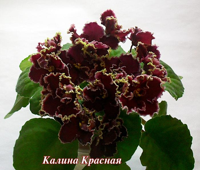 Цветы в Кемерово Бесплатная доставка цветов по городу